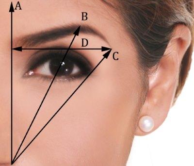 Правило определения идеальной формы брови