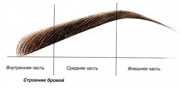 бровь