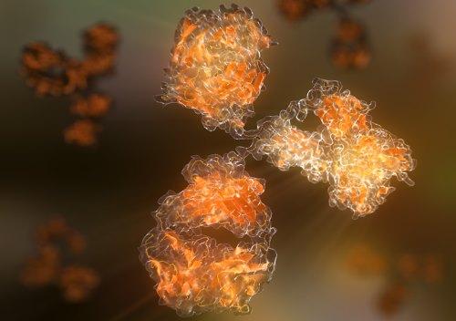 Антитела имунной системы