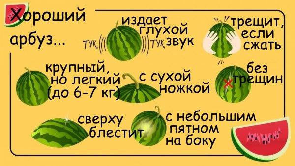 Инструкция по выбору арбуза.