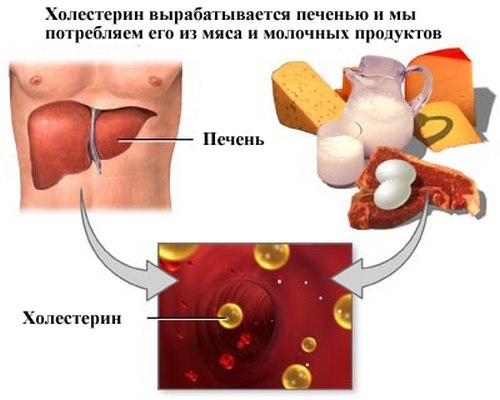 как уменьшить холестерин в крови у женщин