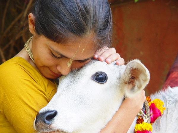 Индианка с коровой