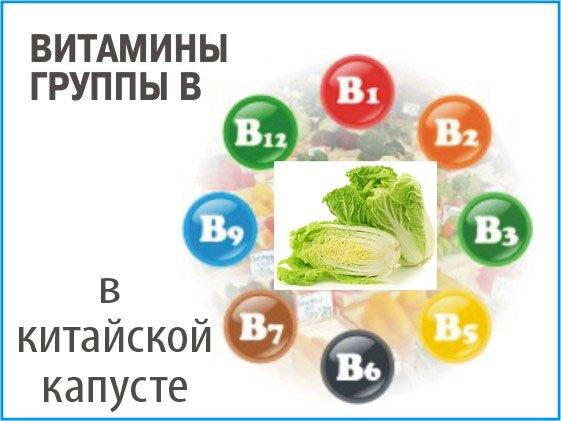 Китайская капуста. Полезные свойства и вред, калорийность. Рецепты блюд из китайской капусты