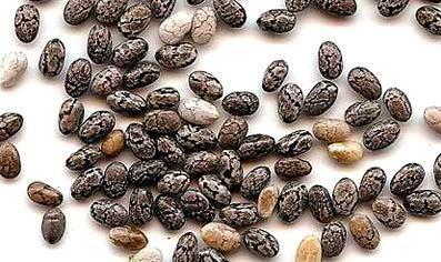 Семена Чиа - полезные свойства и противопоказания, как приготовить, употреблять