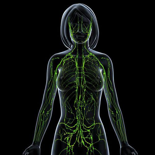 Лимфатическая система женщины