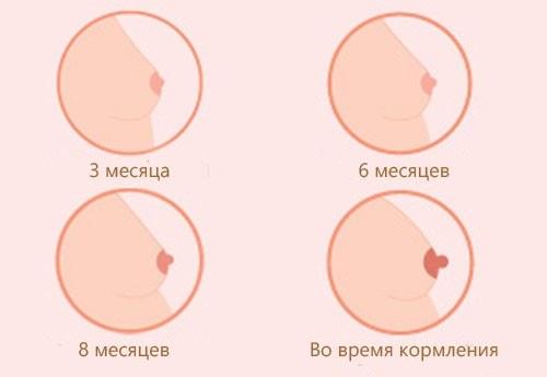 Через какое время после зачатия увеличивается грудь, как меняются грудные железы