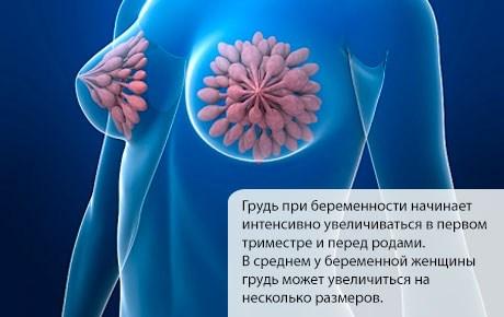 Спустя какое время после зачатия начинает болеть грудь. Признаки ранней беременности