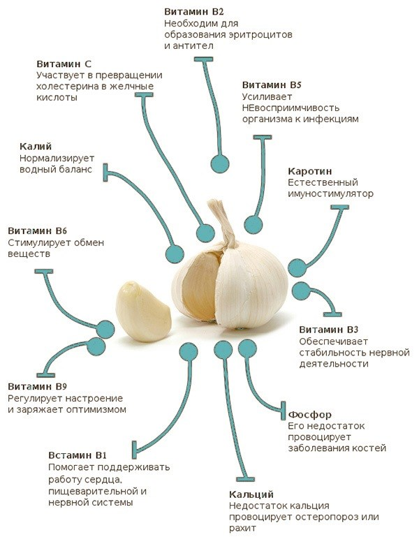 Чеснок – полезные свойства, вред для здоровья, организма женщины