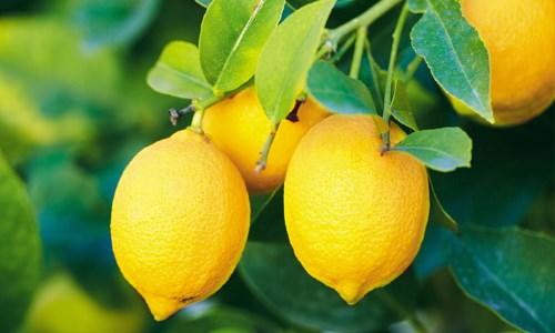 Лимон с солью – полезные свойства и вред. Рецепты укрепления здоровья, лечения