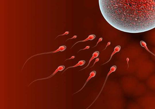 Можно ли забеременеть сразу после месячных. Какая вероятность зачатия