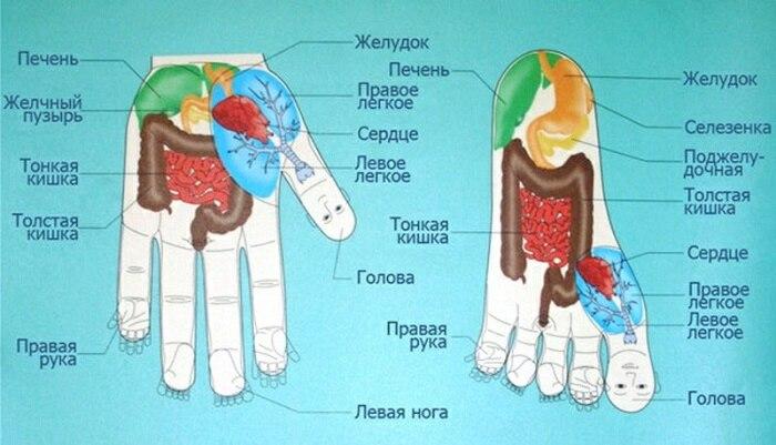 Суджок терапия, Атлас точек на ладони - действие на здоровье, как применять