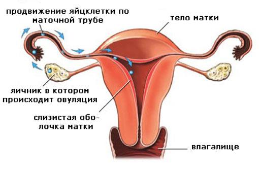 Вероятность забеременеть во время месячных. Признаки беременности