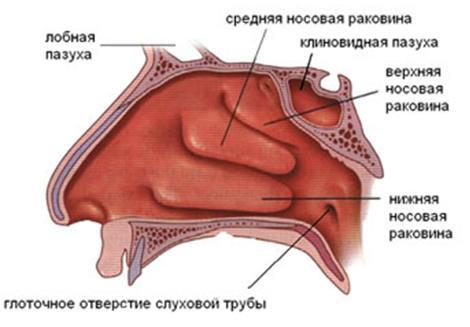 Заложенность носа без насморка. Причины, лечение заложенности носа