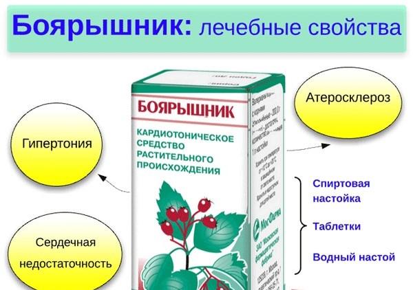 Отвар Боярышника. Полезные свойства, противопоказания. Какие болезни лечит боярышник