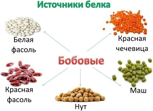 Список продуктов, которые относятся к белковой пище животного и растительного происхождения