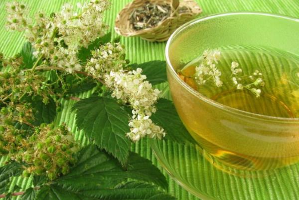 Таволга - трава. Полезные свойства, противопоказания, лечебное применение