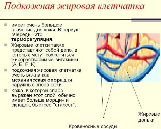 Массаж для организма женщины, мужчины, ребенка. Польза для шеи, спины, тела и лица