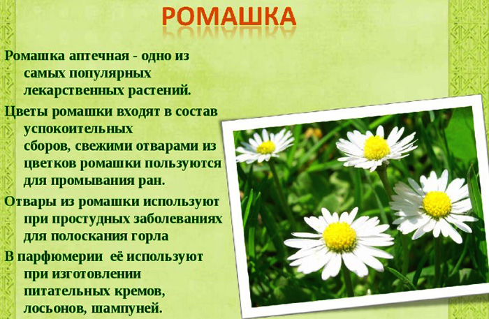 Крем Натура Сиберика (Natura Siberica) для чувствительной кожи Защита и увлажнение ночной, дневной. Отзывы