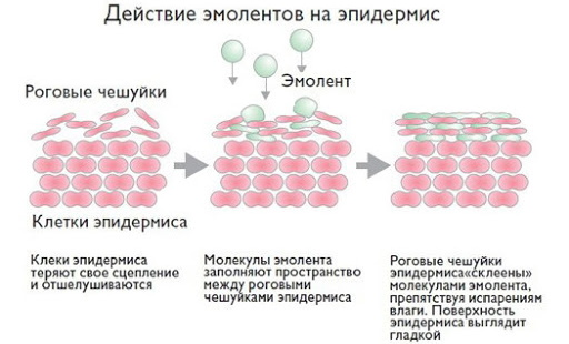 Lipobase (Липобейз) эмульсия для тела. Отзывы, инструкция по применению